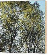 Sunlit 14-1 Wood Print