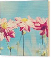 Sunlit Anemone Flowers With Cross Processed Effect Wood Print