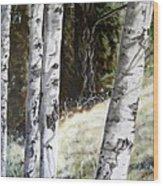 Sunlit Aspens Davis Creek Montana Wood Print
