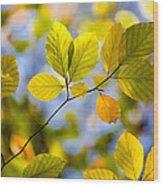 Sunlit Autumn Leaves Wood Print by Natalie Kinnear