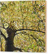 Sunlit Autumn Tree Wood Print by Natalie Kinnear