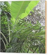 Sunlit Banana With Bamboo Wood Print