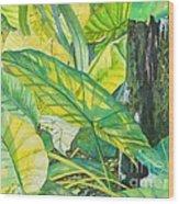 Sunlit Elephant Ears Wood Print