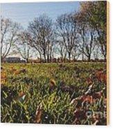 Sunlit Fall Lawn Wood Print