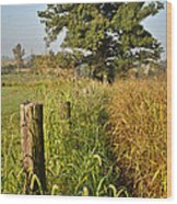 Sunlit Fence Posts In Weeds Wood Print