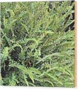 Sunlit Ferns Wood Print