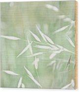 Sunlit Grass Wood Print