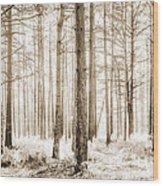 Sunlit Hazy Trees In Neutral Colors Wood Print