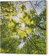 Sunlit Leaves Wood Print