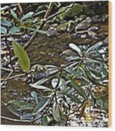 Sunlit Mountain Laurel Wood Print by JW Hanley