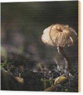 Sunlit Mushroom Wood Print