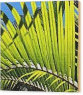 Sunlit Palm Tree  Wood Print