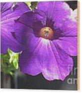 Sunlit Petunias Wood Print