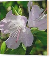 Sunlit Rhododendrons Wood Print