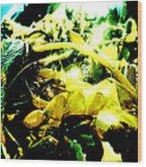 Sunlit Seaweed Wood Print
