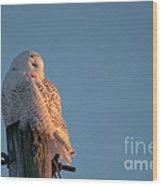 Sunlit  Snowy Wood Print