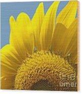 Sunlit Sunflower Wood Print