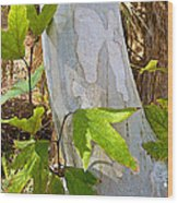 Sunlit Sycamore Leaves In Andreas Canyon In Indian Canyons-ca Wood Print
