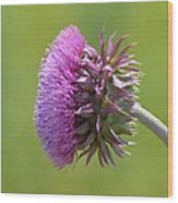 Sunlit Thistle Wood Print