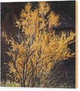 Sunlit Tree In Palo Duro Canyon 110213.06 Wood Print