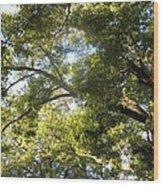 Sunlit Tree Tops Wood Print
