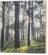 Sunlit Trees Wood Print