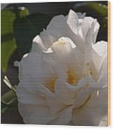 Sunlit White Camelia 2013 Wood Print