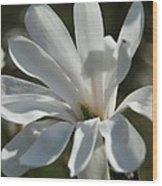 Sunlit White Magnolia Wood Print