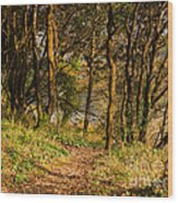 Sunlit Woods In Late Autumn Wood Print