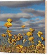 Sunlit Yellow Wildflowers Wood Print