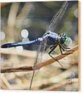 Sunning Blue Dragonfly Square Wood Print