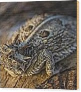 Sunning Texas Horned  Wood Print