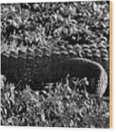 Sunny Alligator Black And White Wood Print