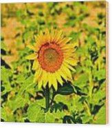 Sunny Wood Print by BandC  Photography