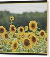 Sunny Days 8466 Wood Print