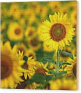 Sunny Delight Wood Print