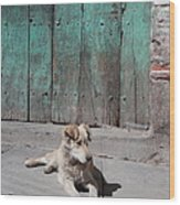 Dog Enjoying A Sunny Doorstep Wood Print