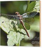 Sunny Dragonfly Wood Print