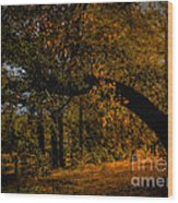 Sunny Fall Afternoon Wood Print