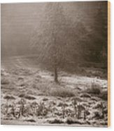 Sunny Frosty Douglassville Wood Print