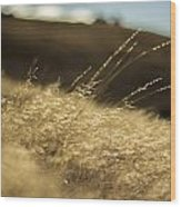 Sunny Grain Wood Print