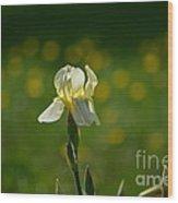 Sunny Iris Wood Print