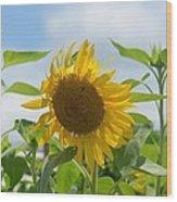 Sunny July 2013 Wood Print