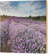 Sunny Lavender Wood Print