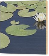 Sunny Lily Pond Wood Print