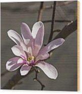 Sunny Pink Magnolia Blossom Wood Print