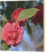 Sunny Red Camelias Wood Print