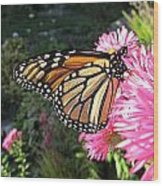 Sunny Side Monarch Wood Print