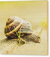 Sunny Snail Wood Print