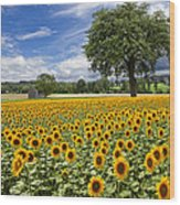 Sunny Sunflowers Wood Print